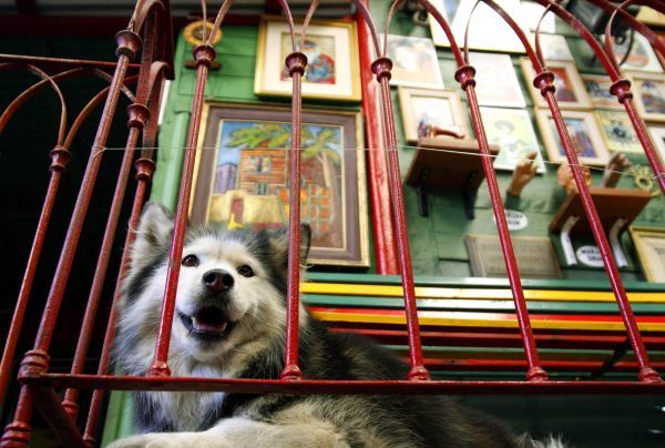 A dog rests at a balcony in the La Boca neighborhood of Buenos Aires April 12, 2007. REUTERS/Srdjan Zivulovic (ARGENTINA)