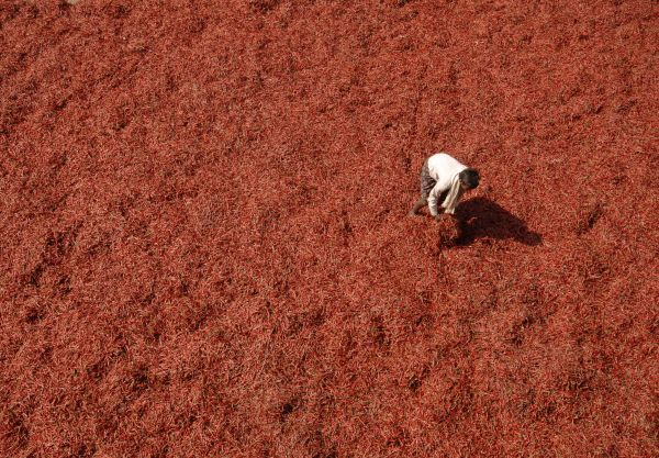 A labourer spreads red chillies to dry at a wholesale market on the outskirts of the southern Indian city of Hyderabad March 27, 2009