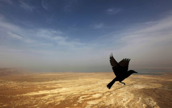 A bird lands on a balcony at the ancient Jewish site of Masada, October 17, 2009