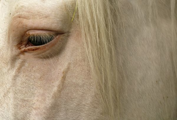 A horse is pictured in a stable during the Sicab the International Pre Horse Fair show in the Andalusian capital of Seville November 26, 2009. The show runs until November 28 and is dedicated exclusively to Spanish thoroughbreds. REUTERS/Marcelo del Pozo