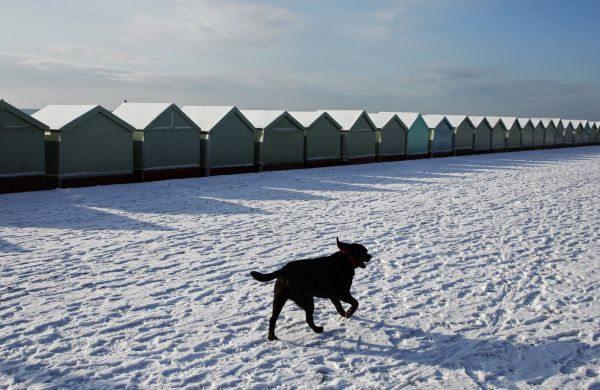 A dog runs past snow covered beach huts in Brighton, southern England January 7, 2010