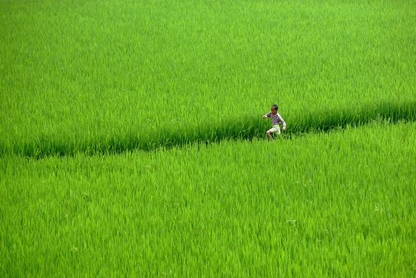 A Chinese boy runs through a field in the countryside of Jinzhai county in China's central province of Anhui in this picture taken July 13, 2004. The number of Chinese living in abject poverty rose by 800,000 last year, the first such increase in 25 years
