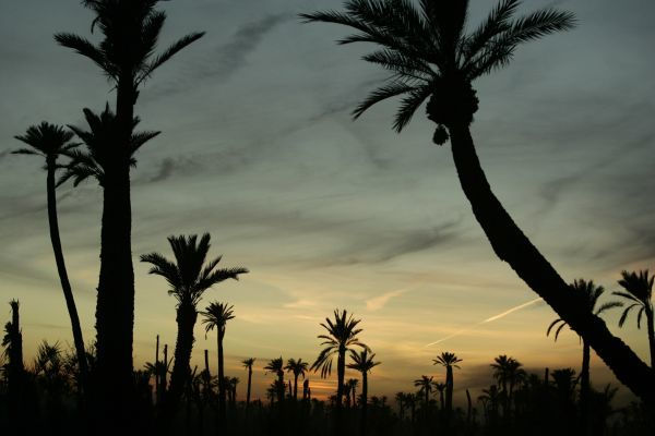 The sun sets on a palm forest in Marrakesh December 11, 2007. REUTERS/Rafael Marchante (MOROCCO)