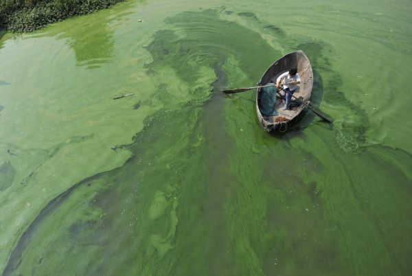 A fisherman rows a boat in the algae-filled Chaohu Lake in Hefei, Anhui province, June 16, 2009. The country has invested 51 billion yuan towards the construction of 2,712 projects for the treatment of eight rivers and lakes including Huaihe River