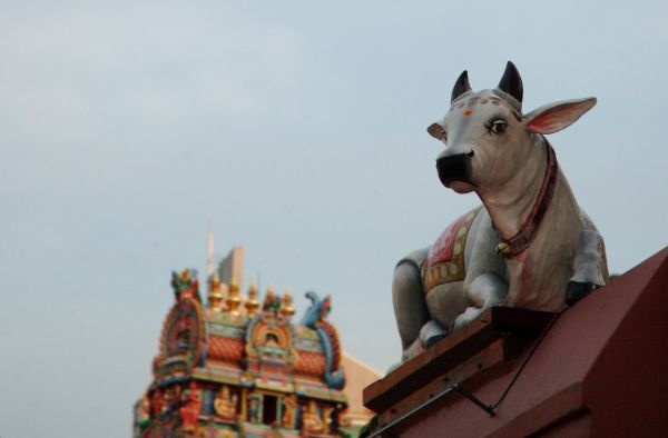 "A decorative sculpture of a sacred cow is seen on a wall of the Sri Mariamman Temple with the ""gopuram"", a monumental tower, in the background, in Chinatown, central Singapore October 1, 2010"