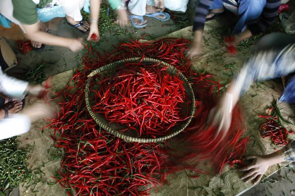 Workers select chillies in a stall at the Kramat Jati vegetable distributors centre in Jakarta January 11, 2011