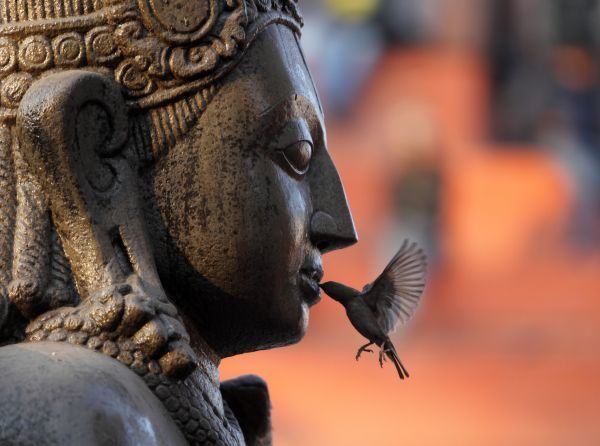 A sparrow feeds on an offering placed in the mouth of the idol of Lord Garud in Kathmandu January 30, 2011. REUTERS/Navesh Chitrakar (NEPAL - Tags: RELIGION SOCIETY IMAGES OF THE DAY)