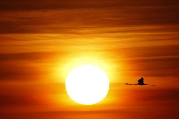 A flamingo flies during sunrise at the Fuente de Piedra natural reserve, near Malaga, in southern Spain August 6, 2011
