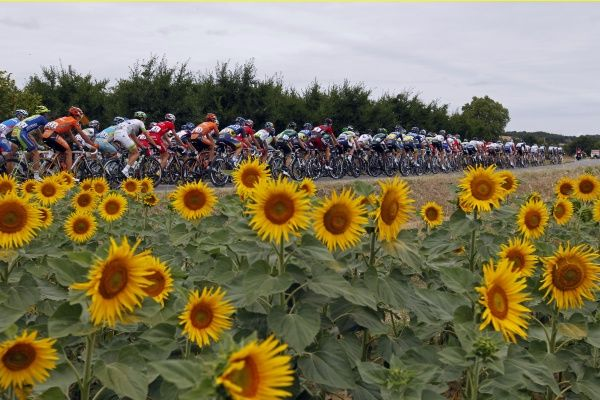 The pack of riders cycles past sunflowers during the 18th stage of the 99th Tour de France cycling race between Blagnac and Brive-La-Gaillarde, July 20, 2012. REUTERS/Stephane Mahe (FRANCE - Tags: SPORT CYCLING)