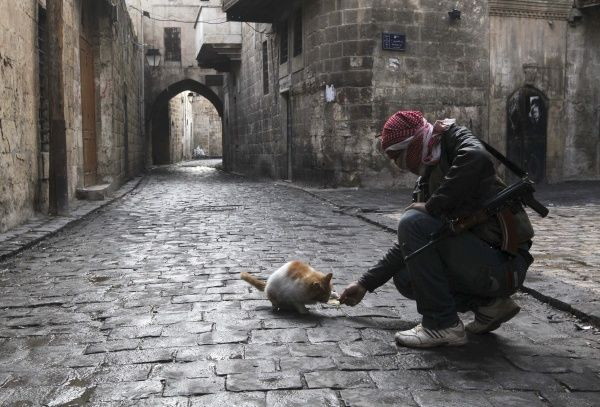 A Free Syrian Army fighter feeds a cat in the old city of Aleppo January 6, 2013. REUTERS/Muzaffar Salman (SYRIA - Tags: CONFLICT ANIMALS TPX IMAGES OF THE DAY)