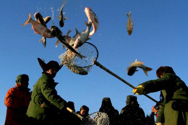 Chinese fishermen throw fish into the sky during the celebration of a winter fishing festival at Chagan Lake in northeast China's Jilin province December 27, 2005. Some 360 people attended the traditional festival that runs from December 27