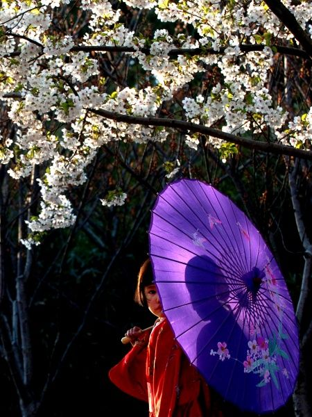 A Chinese girl wearing a kimono poses under a cherry blossom tree at a park in Beijing April 1, 2004. Photo taken April 1. REUTERS/China Photos GN/FA